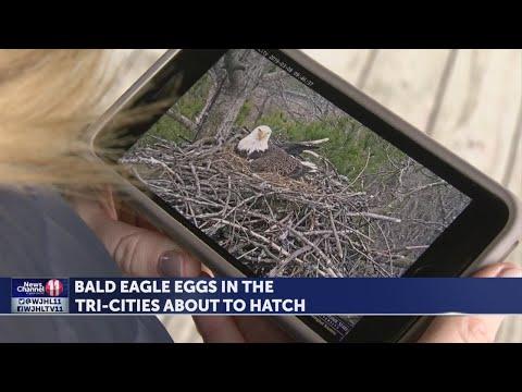 "ETSU ""Eagle Cam"" draws thousands worldwide to watch eggs hatch"