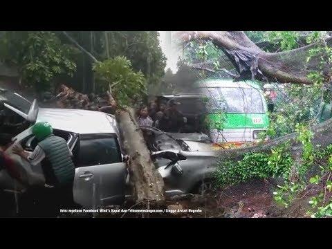 Akibat Puting Beliung di Bogor, Pengemudi Avanza Tewas Tertimpa Pohon Mp3
