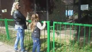 VLOG ЗООПАРК В МИНСКЕ Дикие Животные /VLOG Zoo In Minsk, Wild Animals/