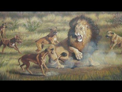 Rhodesian Ridgeback - Cazador de LEONES - Origen