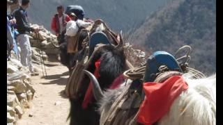 Tengboche monastery trek - Everest Region Nepal - April 2010