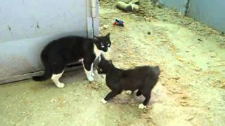 Одесские  Коты БЛИЗНЕЦЫ ;)(РОМАН МЕЛЬНИЧЕНКО)