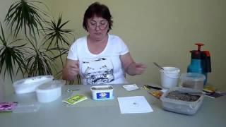 видео Гацания – африканская ромашка, выращивание из семян, фото цветов. Когда сажать рассаду