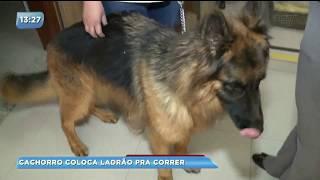 Cachorro coloca ladrão para correr em clinica veterinária