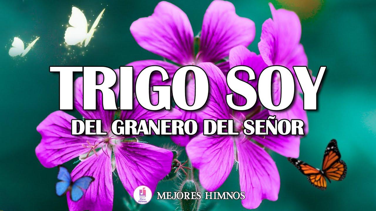 Download Trigo Soy Del Granero Del Señor - Hermosos Himnos Para Comenzar El Día Lleno De Bendiciones