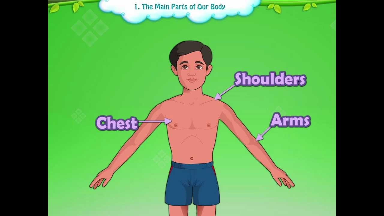 Learn Grade 1 | EVS | Parts of the Body for Kids | KidsClassroom