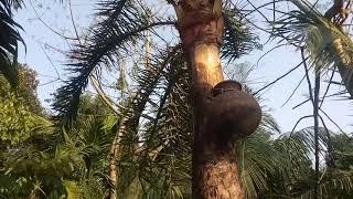 জলও উজান বাতাস উজান ।। পল্লীগীতি গান ।। folk bangla song ।।