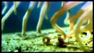 Invertebrados - Trabalho de Biologia - 3º J