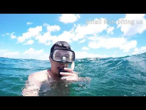 Snorkeling - Dania Beach