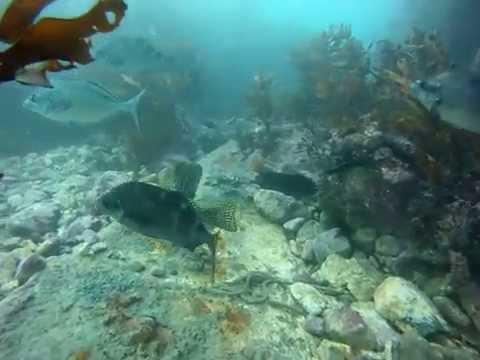 SCUBA Diving in Wellington Marine Reserve