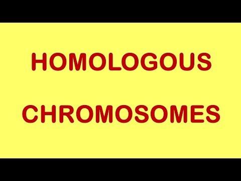 Concepts Of Genetics : Homologous Chromosomes