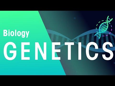 Genetics & Cell Division Keyword Definitions | Genetics | Biology | FuseSchool