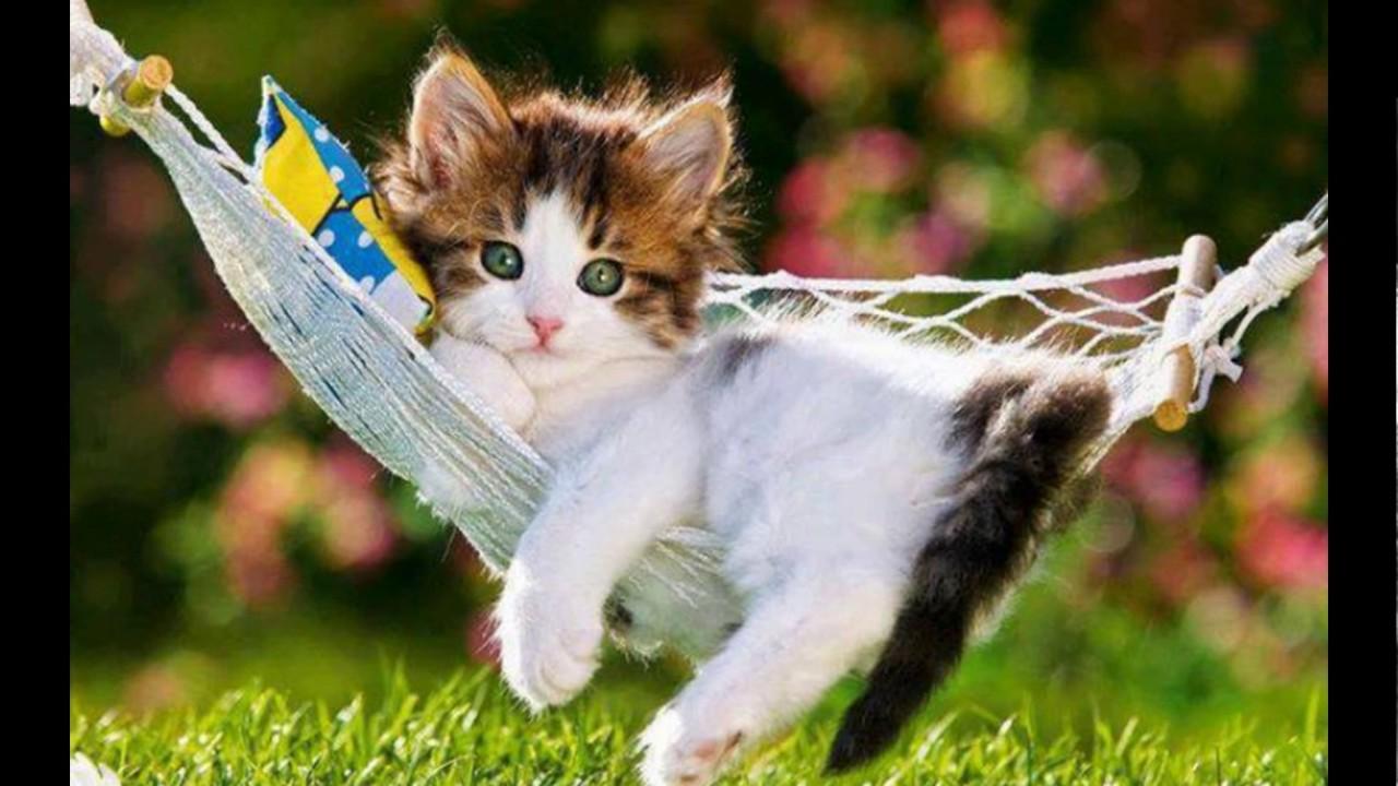 Wwwspruchclub Katzen Kater Kätzchen Mehr Youtube