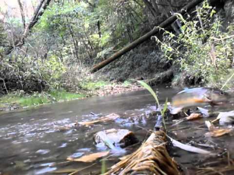 Iowa trout fishing youtube for Trout fishing iowa