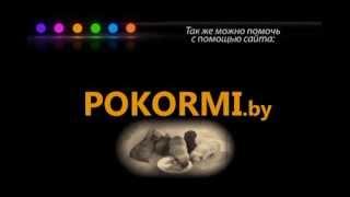 Волонтерское движение по защите бездомных животных в Гомеле