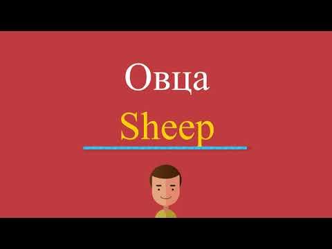 Как по английски будет слово овца