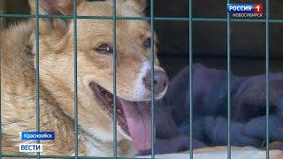 Волонтёры приюта для животных в Краснообске просят о помощи в снабжении кормом