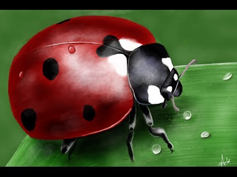 Realistic ladybug drawing - photo#7