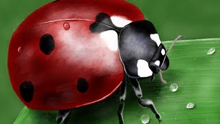 How to draw a ladybug with: Paper by 53
