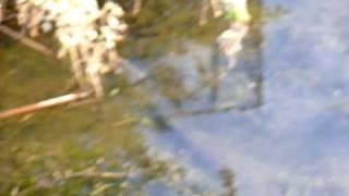 ナマズがルアーに食いつく瞬間。 thumbnail