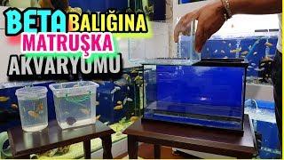 BETA BALIK ÜRETİM AKVARYUM KURULUMU, akvaryum balıkları