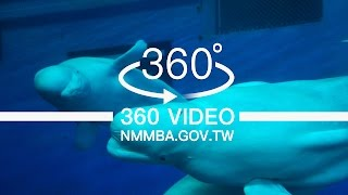 海生館VR360度影片:珊瑚王國館-白鯨池(互動)