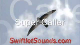Swiftlet Sound - Super Caller External Sound