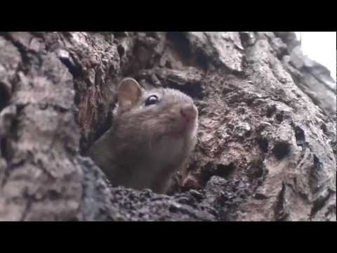Chipmunk Living inside tree trunk