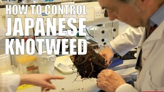 How to Control Japanese Knotweed