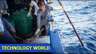 Tracing Tuna Fish With Electronic Sensing Device | Technology World | Ep 24