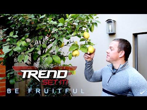 Be Fruitful