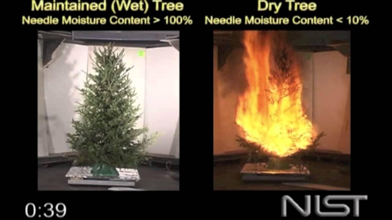 Christmas Tree Fire Hazards Of A Dry Tree Youtube