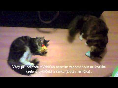 KOZLÍK LÉKAŘSKÝ A ŠANTA KOČIČÍ - nejlepší kočičí dárek :)