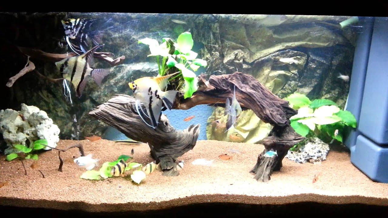Acuario sustrato manado 200l aquarium altum youtube for Aquarium 200l