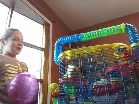 How to clean your Hamster cage! Part one!