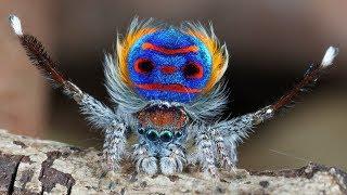 أغرب 10 عناكب في العالم