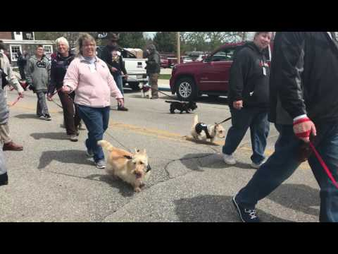 Scotty Dog Parade 2017