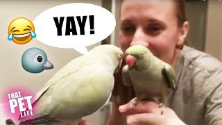 Birds Say the Darndest Things 🐦😂 | Funny Animal Compilation