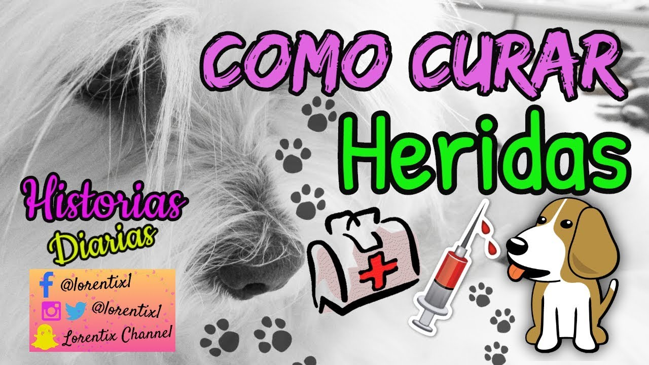 Como curar heridas de perros profundas