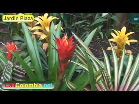 Jardin Plaza Centro Comercial en Cali Colombia