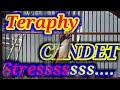 Terapi Cendet Stress Memulihkan Mental Cendet Yang Down Dengan Pancingan Cendet Ini  Mp3 - Mp4 Download