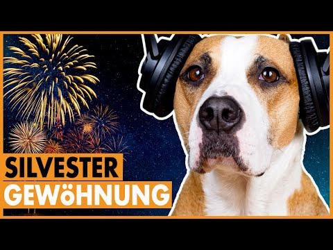 Silvester mit Hund / So gewöhnst du deinen Hund an Silvester / Entspannter Hund zum Jahreswechsel