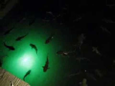 hydro glow light with lots of catfish - youtube, Reel Combo