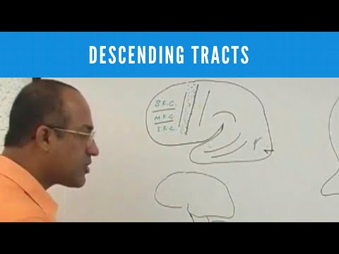 Descending Tracts - Corticospinal Tract - Pyramidal & Extrapyramidal Tract