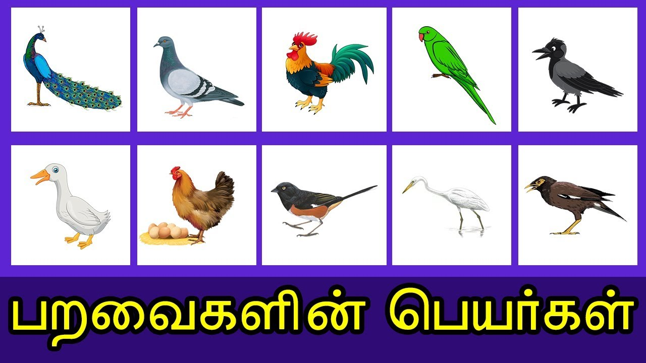 Birds Images With Name In Tamil | Images HD Download