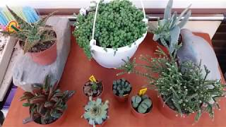 Succulent and cacti haul. What i bought from the flower festival.