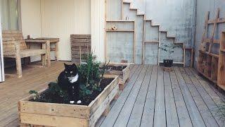 CAT BABYSITTING - Figaro The Cat