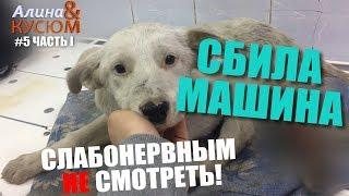 Бездомный щенок неделю сидел со сломанной лапой! | Алина Волонтёр