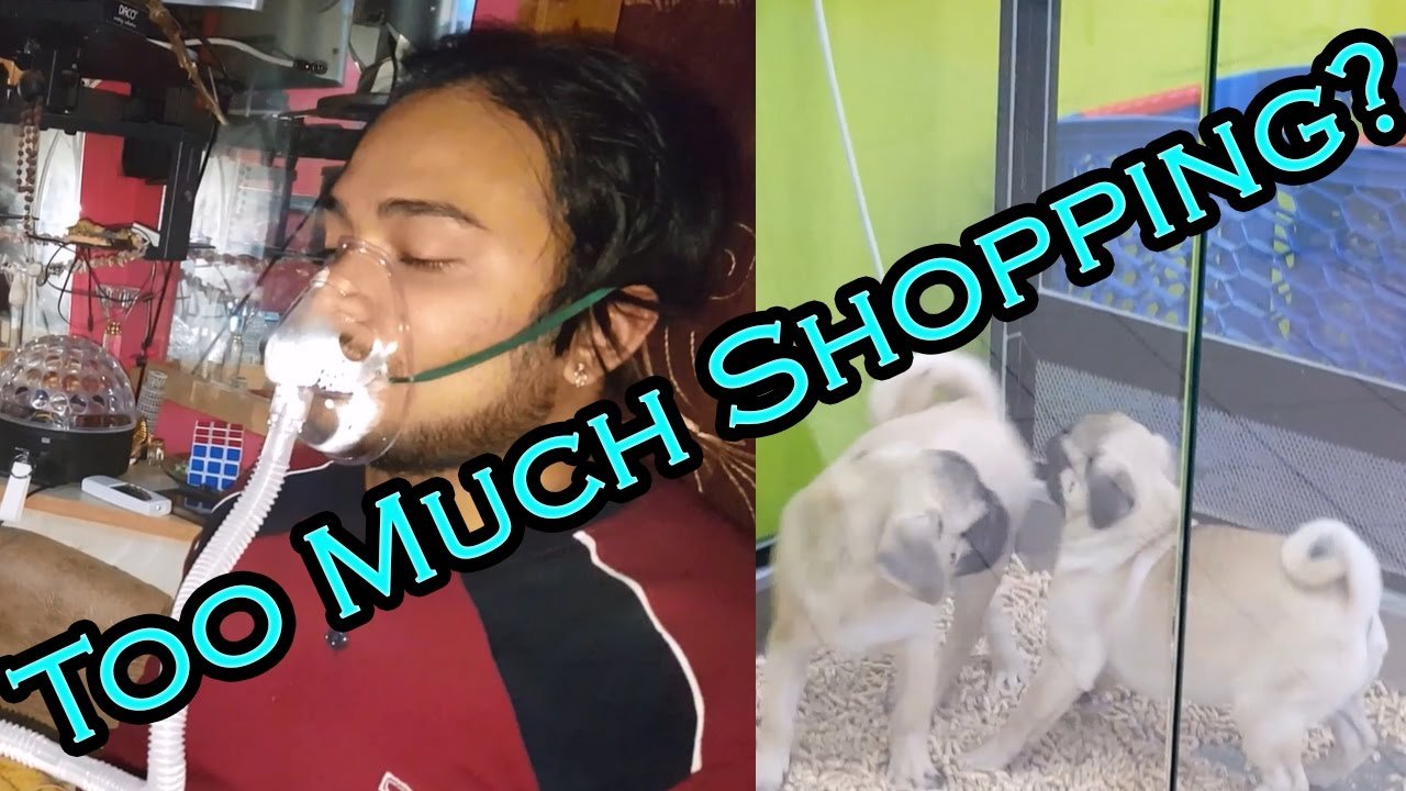 Shopping haul gone wrong? |* super cute puppies