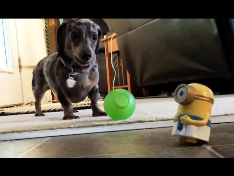 Cats and Dogs vs. Machines Compilation